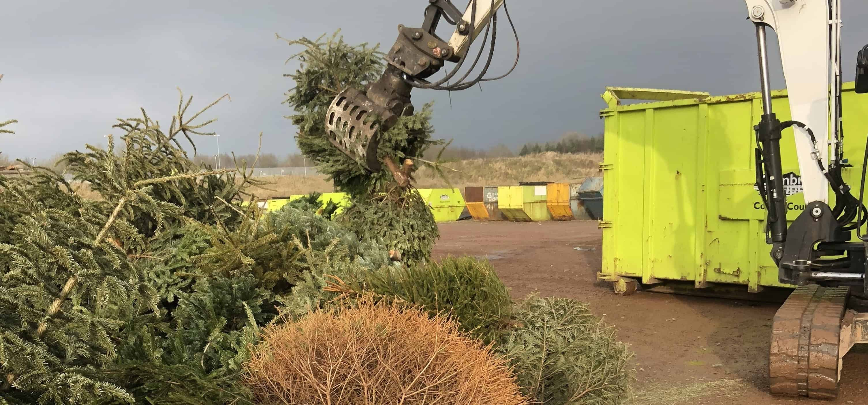 Christmas tree collection appeal